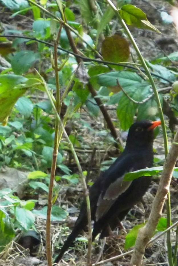 New bird seen in Panna
