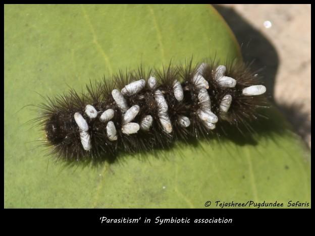 Symbiotic Association