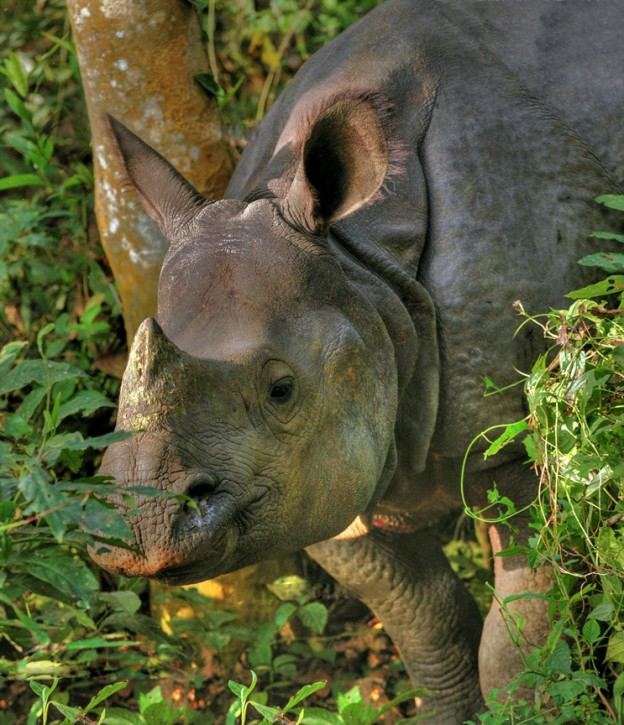 Rhinos and Chitwan – Conserved for each other
