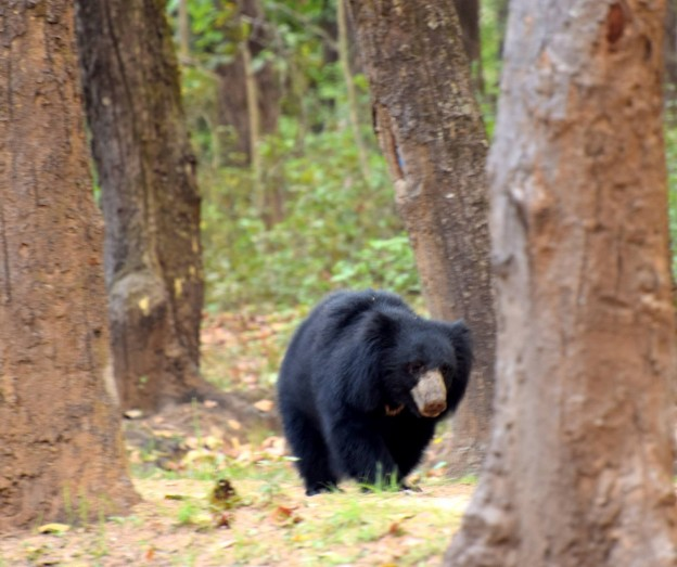 Wildlife of Central India : The Six Rare Mammals