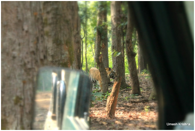 First Sight:Munna walking through dense forest