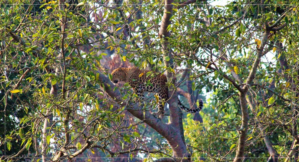 Some amazing and interesting facts about Leopards