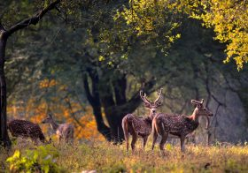 Things to Do in Kanha : A Travel Guide to Kanha National Park