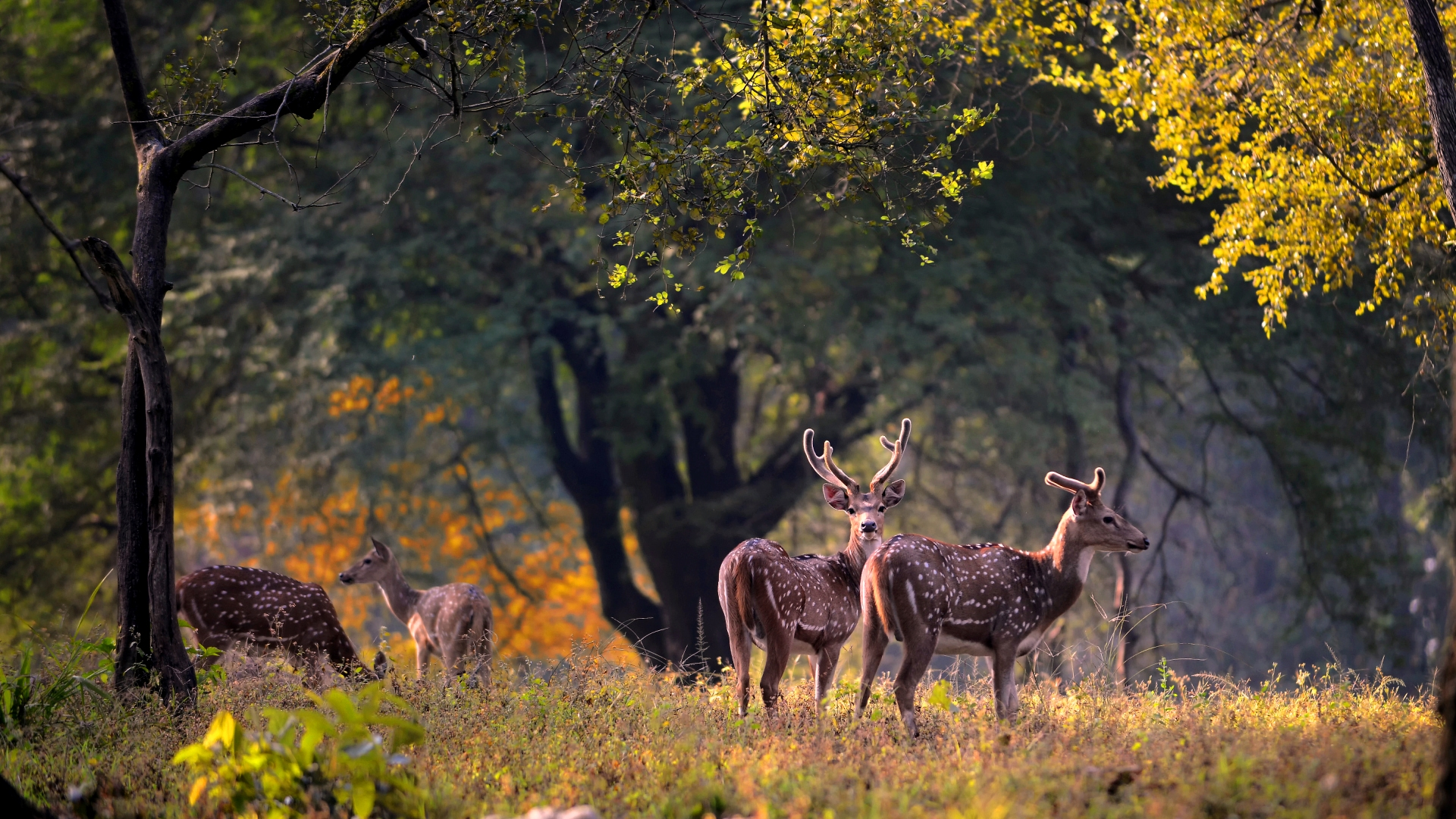 Things to Do in Kanha : A Travel Guide to Kanha National ...