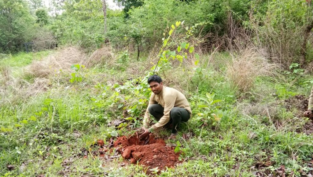 Tree Plantation - Van Mahotsav