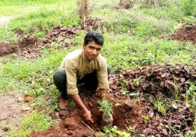 Tree Plantation – Van Mahotsav