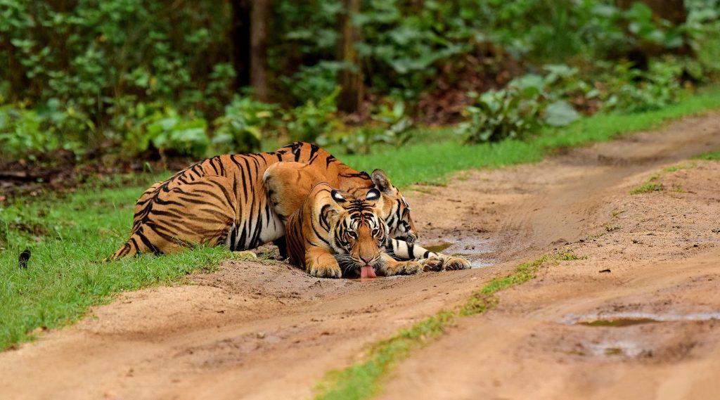 Choti Mada with her cub