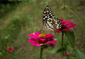 Butterfly Garden at Kings Lodge, Bandhavgarh