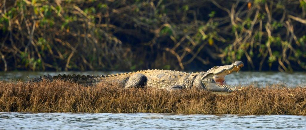 Satpura National Park | Denwa Backwater Escape