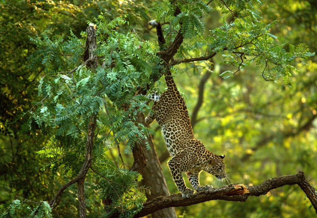 Pench National Park | Pench Tree Lodge