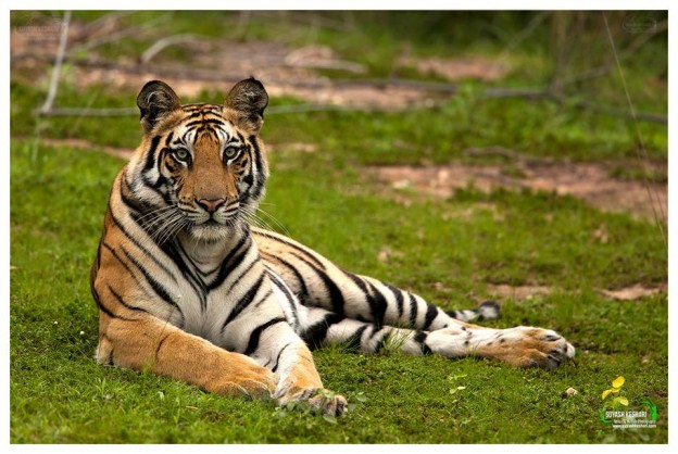 Best Tiger Safari Company in India
