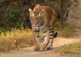 Best Places to See Tigers in India