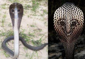 Worshiping them to Death – Myths and Truth about Snakes