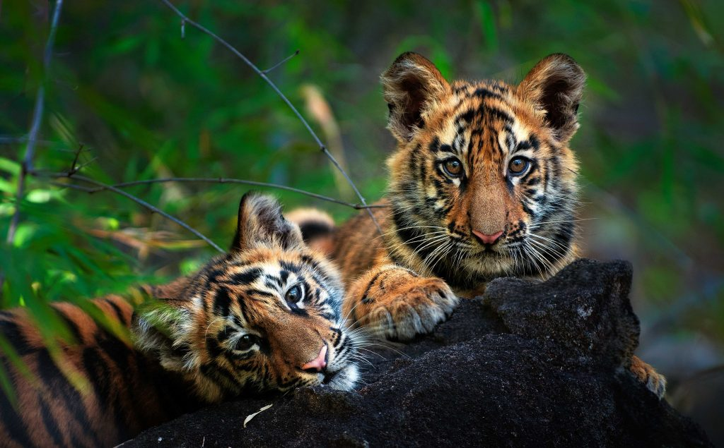 Pugdundee-safaris-Things-to-do-in-Tadoba-2020