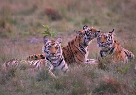 The Untamed Jungles of Central India