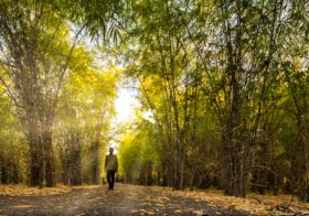 "THE BENEFITS OF ""FOREST BATHING"" – INTERNATIONAL DAY OF FOREST SPECIAL"