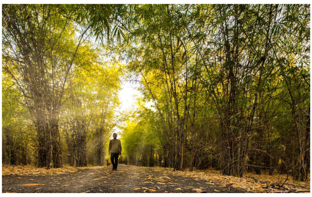 pugdundee safaris forest bathing in india