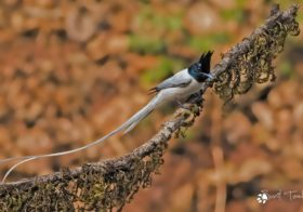 A Fascinating Guide To the Ten Star Birds of Central India