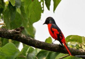 Flying Happiness – Birding Walk at Pench Tree Lodge