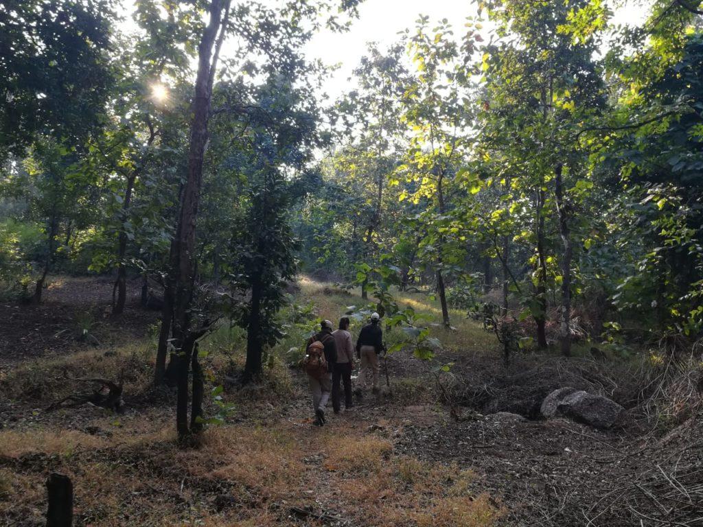 pugdundee-safaris-travelogue-Pench-walking-trail