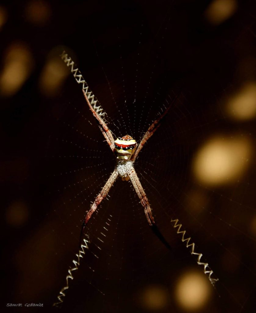 pugdundee-safaris-travelogue-Pench-spider-at-night-trail
