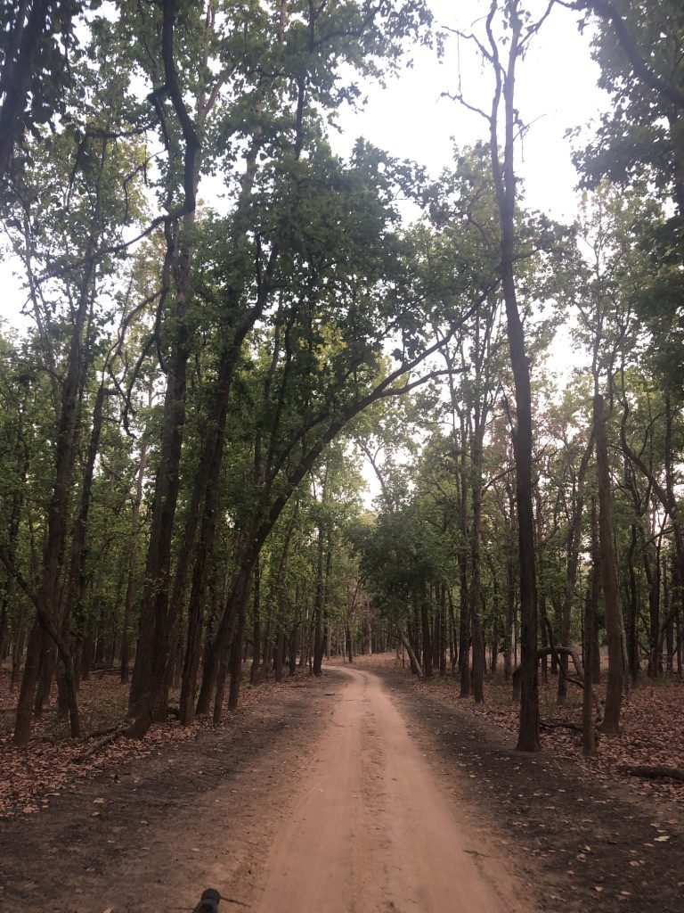 travel-diary-kanha-diaries-part-2-law-of-the-jungle-pugdundee-safaris-forest