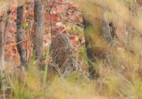 Kanha Diaries Part 2: Lessons from the Jungle