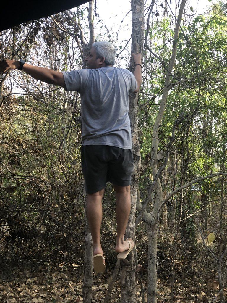 travel-diary-kanha-diaries-part-2-law-of-the-jungle-pugdundee-safaris-tree