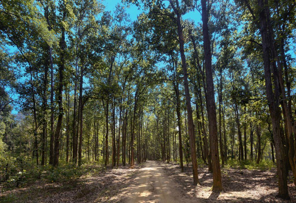 pugdundee-safaris-Jungle-view-kanha-national-park
