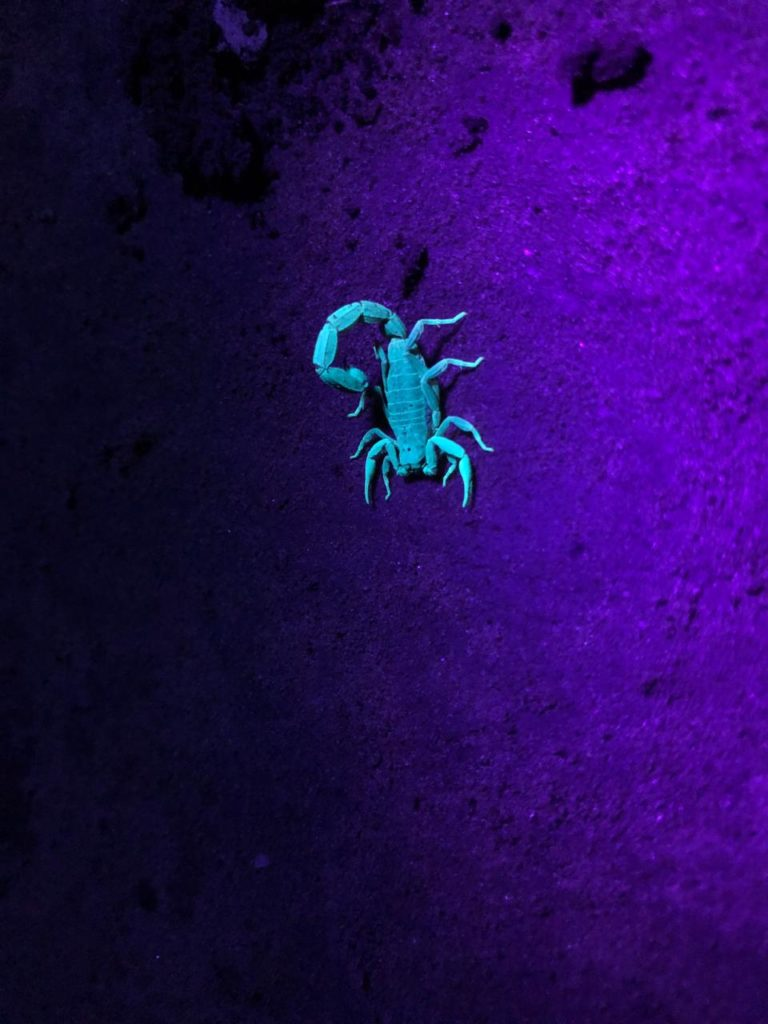 Pugdundee-safaris-naturalist-training-program-scorpion