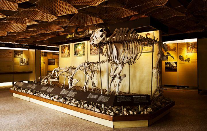 pugdundee-safaris-kanha-national-park-museum