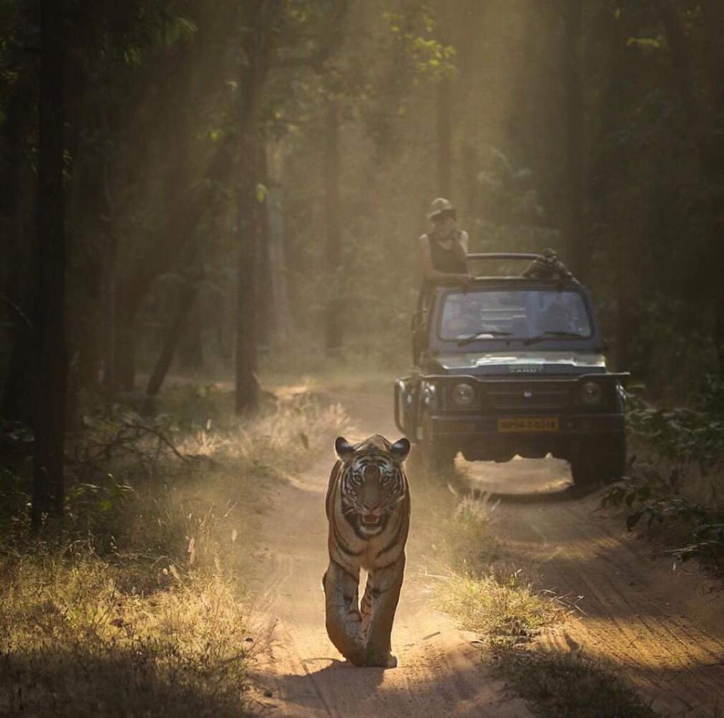 Pugdundee-safaris-tiger-safaris-in-india