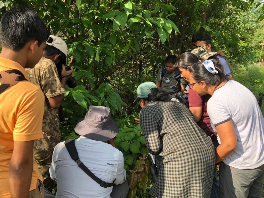 Pugdundee-safaris-study-in-field