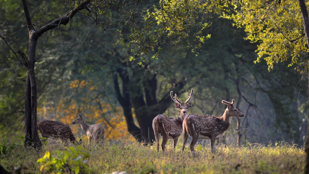 pugdundee-safaris-kanha-national-park-wildlife