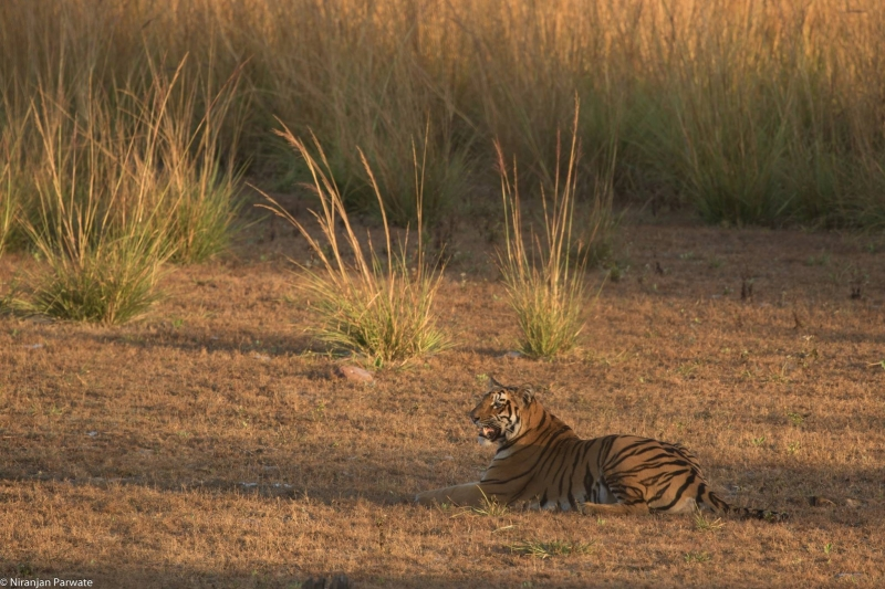 Pugdundee-safaris-things-to do-in-tadoba-2020