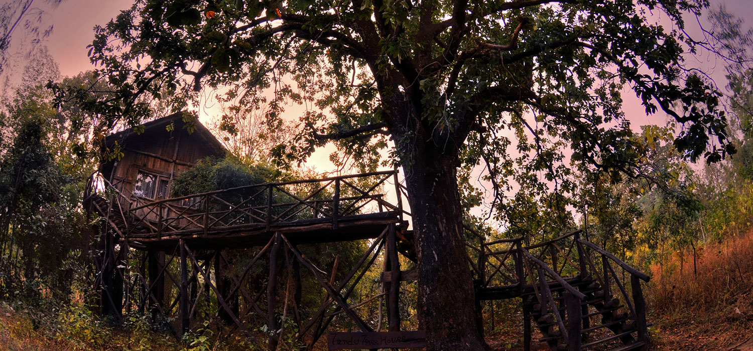Tree Houses in Bandhavgarh