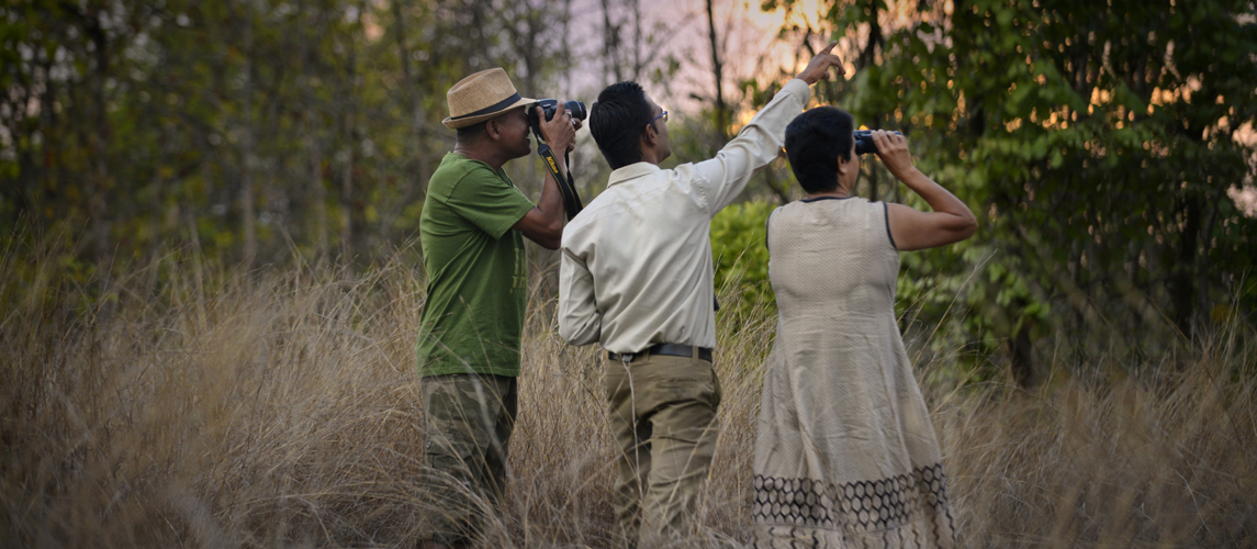Birdwatching in pench national park