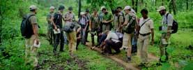 Short Safari Tours