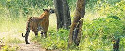 Walk on the wild side at Satpura Reserve